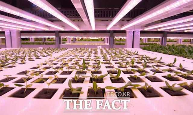 안정적인 LED광원을 통해 싹을 틔우는 식물들.