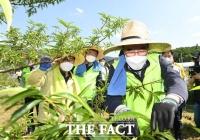 열매 솎이 작업하는 이성희 농협중앙회장 [포토]
