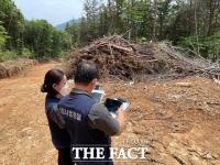 산림청, 산림보호지역 불법 벌채 행위 집중 단속