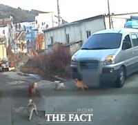 도로 위 유기견 차로 치어 숨지게 한 운전자 정식 재판