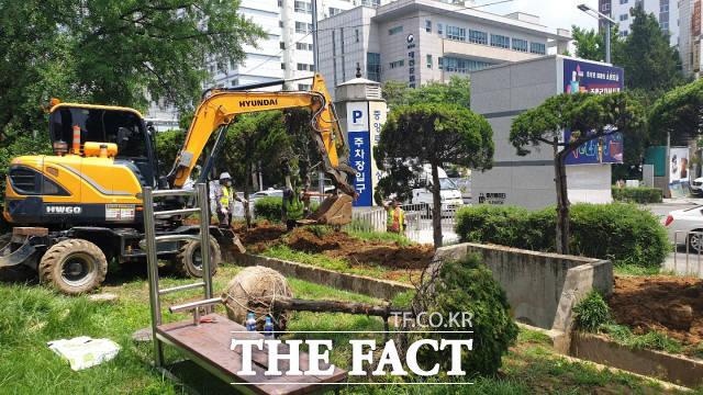 12일 대전시 금고동 양묘장에 있던 향나무를 옛 충남도청사에 옮겨 심는 모습 / 최영규 기자
