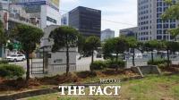 충남도청 향나무 1년 만에 제자리로… 대전시 향나무 사건 '일단락'