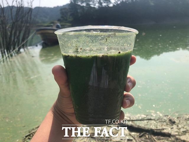 녹조라떼가 된 대청호 물. / 옥천=전유진 기자