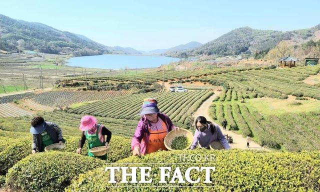 보성군 회천면 영천마을이 겸백면 금곡마을에 이어 보성군에서는 두번째로 전남도 지정 유기농 생태마을로 지정됐다. /보성군 제공