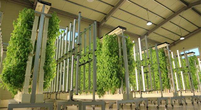 하이트진로가 스타트업 ㈜그린과 지분 투자 계약을 체결했다고 16일 밝혔다. 사진은 ㈜그린이 운영하는 김포 도시 농장. /하이트진로 제공