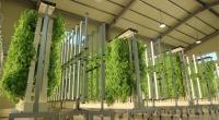 하이트진로, 고부가가치 농산물 재배·유통 스타트업 '그린'에 투자 결정