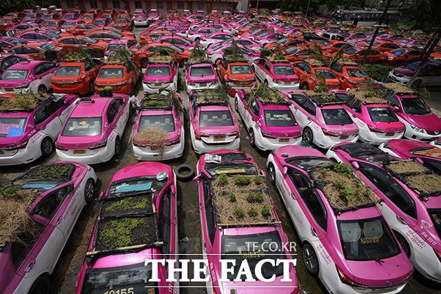 16일(현지시간) 태국 방콕에 주차된 채 방치된 택시 지붕에 미니 정원이 조성돼 있다. /방콕=AP.뉴시스