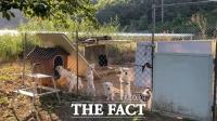연휴가 두려운 반려동물…비정한 주인에 보호소는 만원(영상)