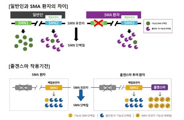 '졸겐스마주'는 퇴행성 신경질환 '척수성 근위축증(SMA)' 환자에게 정맥으로 단회 투여하는 치료제다./출처 한국 노마티스