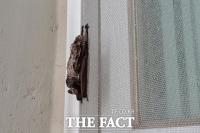 라오스 박쥐서 발견된 바이러스