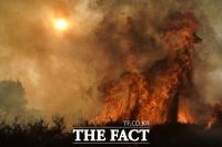 [TF사진관] '악마의 바람' 타고 확산되는 캘리포니아 산불