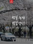 벚꽃원산지 한국 or 일본? 벚꽃논쟁 엔딩